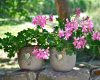 bloemen in pot